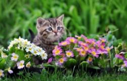 Как прогнать кошек из сада