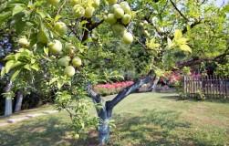 Как ускорить вступление деревьев в плодоношение
