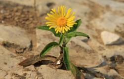 Участок на глине: что посадить и как улучшить