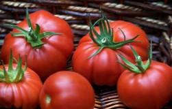 Шесть секретов получения особо крупных помидоров