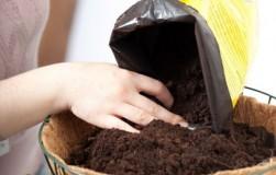 Выбираем почву для инжира