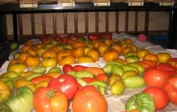Овощи, которые дозреют дома