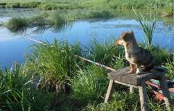 Неожиданный улов, или как щенок поймал крючок