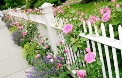 Как укрепить розу к зиме