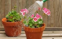 Осторожно, хлор, или плюсы и минусы хлора в почве