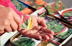 Правильно выбираем семена овощей