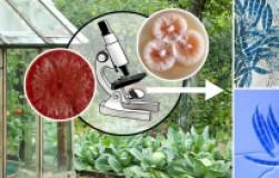 Биофунгициды против болезней – безопасные лекари растений