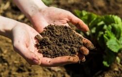 Почва стала щелочной, что делать?