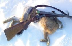 Охота на зайца: как перехитрить косого