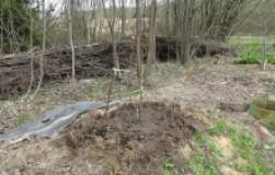 Что посадить при близких грунтовых водах