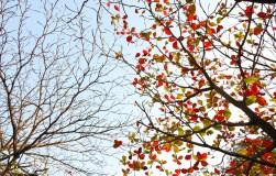 Не осыпались листья с деревьев. надо ли беспокоиться?