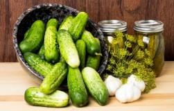 Как выбрать огурцы для солений