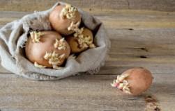 Неужели пора готовить картофель к посадке?