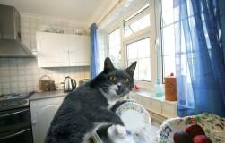 Хочу оставить кошку на две недели одну дома