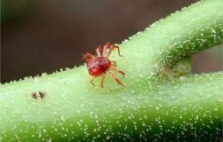 Как извести клеща (паразиты на сотках)