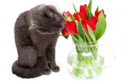 Осторожно: кошка может отравиться цветами
