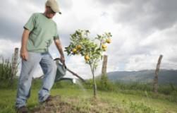 Садовые премудрости (сколько надо воды и удобрений на каждое дерево)