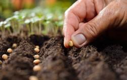 Самые распространенные ошибки при посеве семян