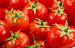 Каждый томат фекалиям рад?