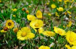 Целебные растения, которые собирают в апреле − мае