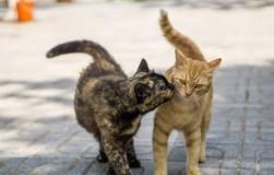 Подобрала котят, а они кота хотят