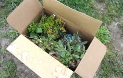 Если вы купили растение по почте