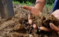 Бурьяну − нет, или как оздоровить уставшую почву