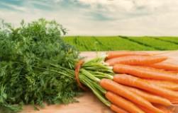 Морковь: любит и не любит