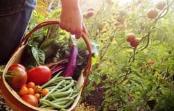 Пять причин недобора урожая