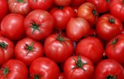 Что случилось с моими помидорами