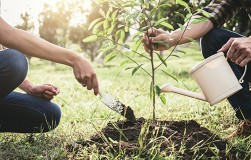 Как быстро и надолго посадить дерево