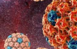 Вирус папилломы человека: что это и как лечить