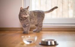 «Непьющая» кошка