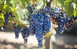 Виноградные вопросы и ответы