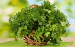 Какая зелень нужна (укроп, петрушка, руккола, шпинат, базилик)