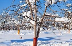 Что угрожает саду зимой