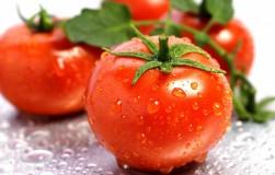Самые плодовитые сорта помидоров