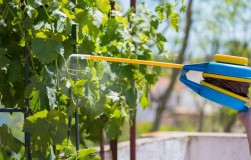Гаупсин на винограднике и не только