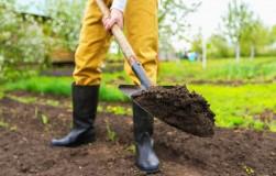 Довести до ума: как облагородить покупную почву