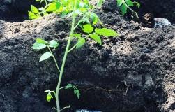 Головы селедок против удобрений
