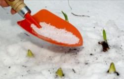 Какие удобрения можно внести по снегу