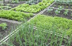 Сад, которому не нужны забота и внимание