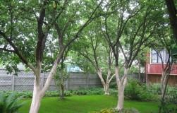 Краска садовая: недорогая и очень полезная