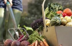 Самые живучие сорта овощей для самых ленивых садоводов