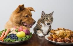 Кто решил, что кошка и собака больше не будут есть мясо