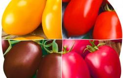 Сорт помидоров Де Барао − мой любимый универсальный сорт