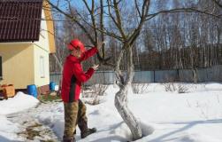 Что делать огороднику в теплую зиму?