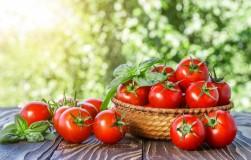 СЕМЬ шагов к успеху при выращивании помидоров