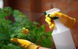 Чем опрыскивать рассаду в квартире
