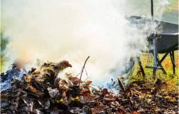 Правила сжигания листвы
